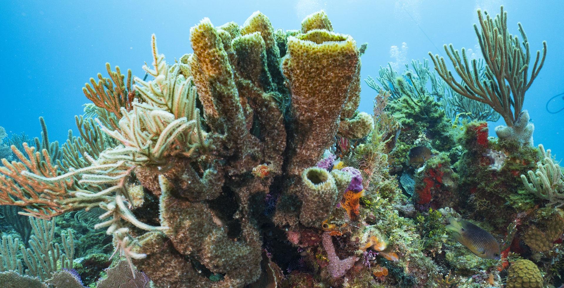 El origen volcánico de los arrecifes